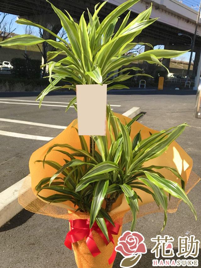 おまかせ観葉植物 8000円