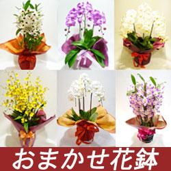 おまかせ花鉢 14000円
