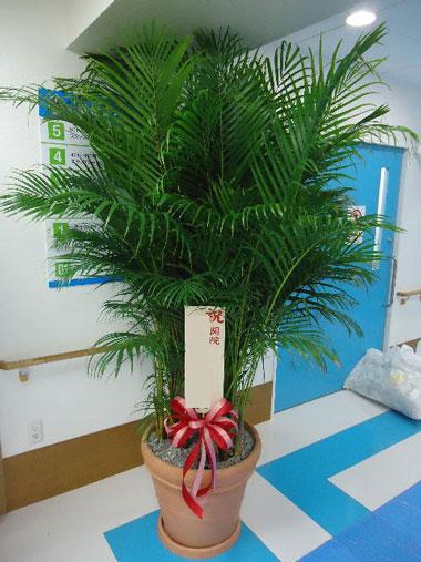 観葉植物 50000円