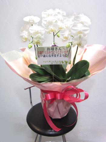 おまかせ花鉢 8000円