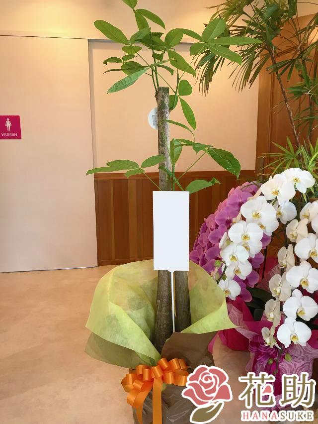 おまかせ観葉植物 11000円
