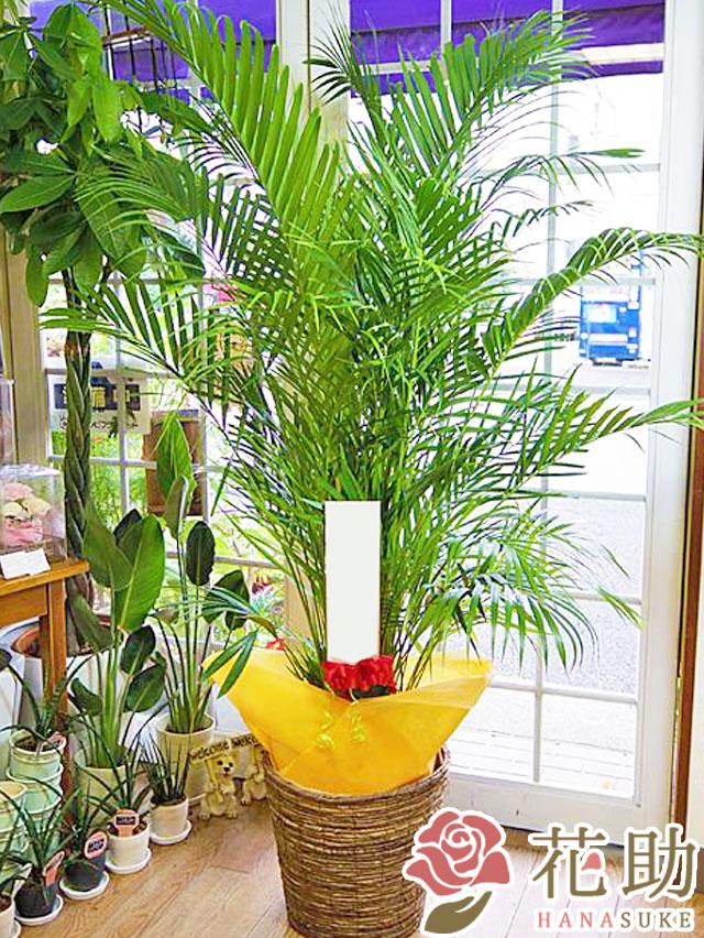 おまかせ観葉植物 18000円