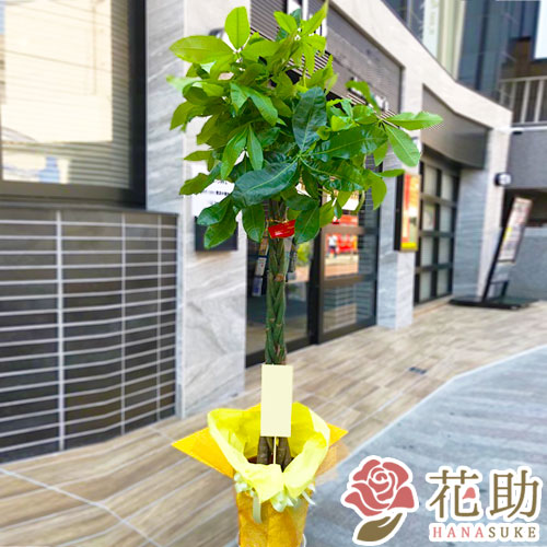 観葉植物 2000円