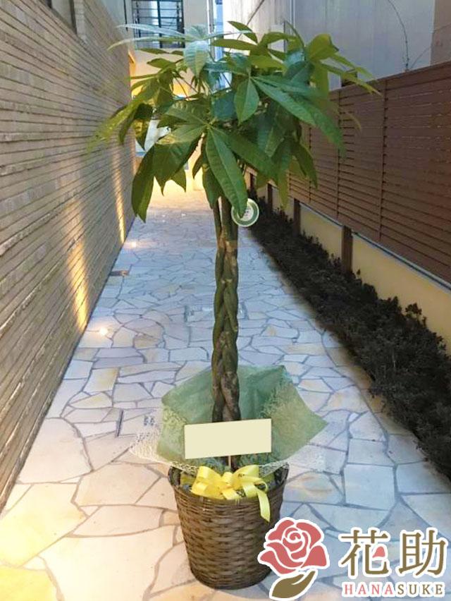 かご入り観葉植物【パキラ】 18000円
