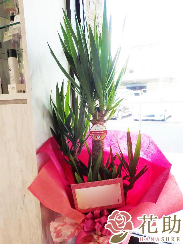 観葉植物【ユッカ】 10000円