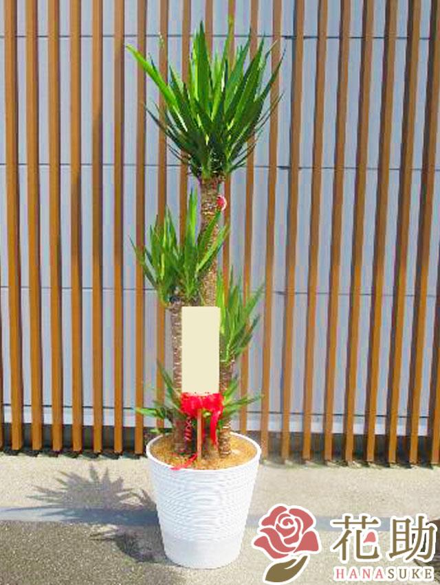 陶器鉢入りおまかせ観葉植物 30000円