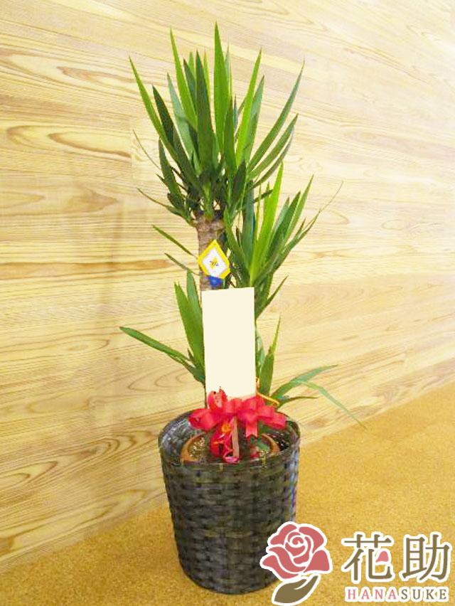 かご入り観葉植物【ユッカ】 18000円