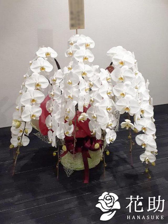 胡蝶蘭 7本立ち 【白】 100000円