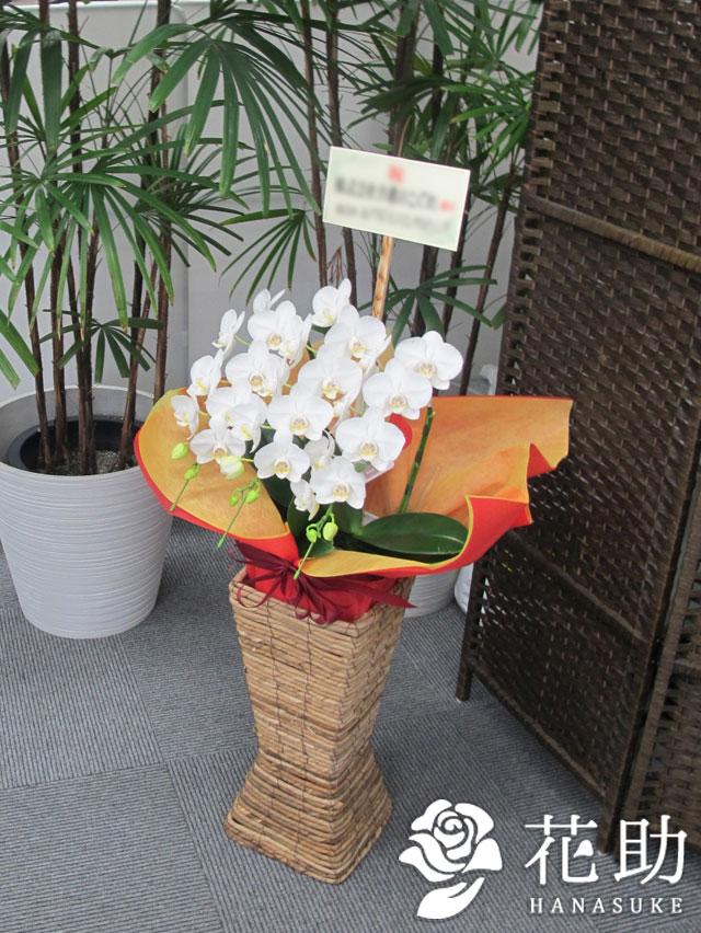 【東京23区限定商品】スタンド付きミディ胡蝶蘭 3本立ち