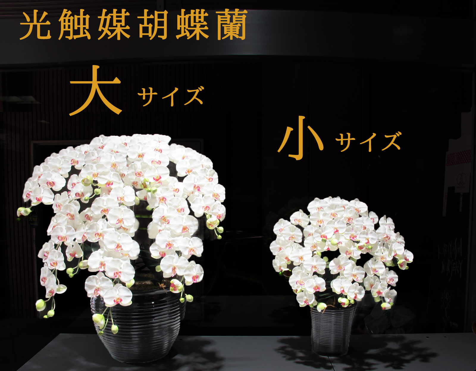 造花 光触媒 胡蝶蘭(大) 55,000円