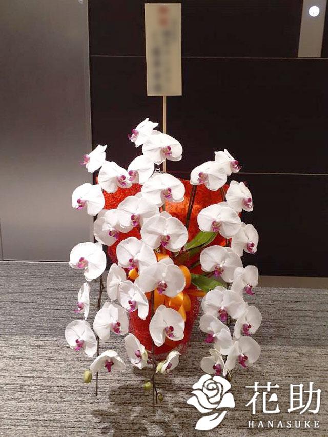 胡蝶蘭 3本立ち 24輪以上 【赤リップ】