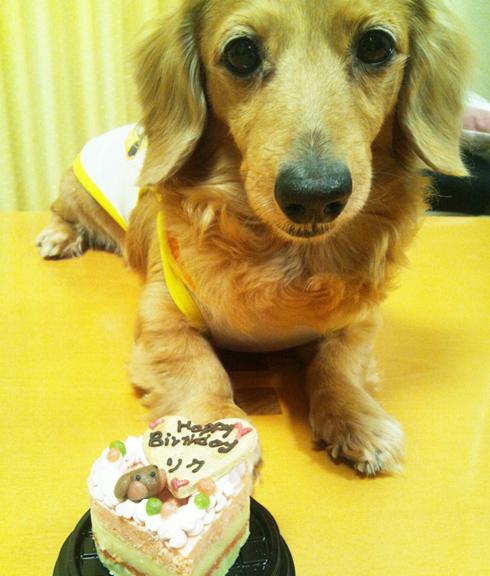 小型犬向け☆ハッピープチLOVEフード【お魚のプチケーキ】
