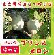 【てしまの苗】 メロン プリンスメロン 断根接木苗 9cmポット 野菜苗 培土 種 堆肥 【人気】