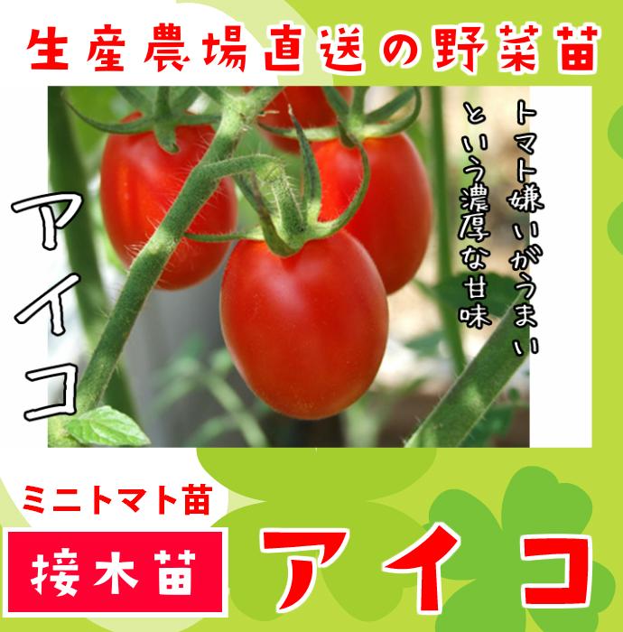 【てしまの苗】 ミニトマト アイコ 断根接木苗 9cmポット 野菜苗 培土 種 堆肥 【人気】