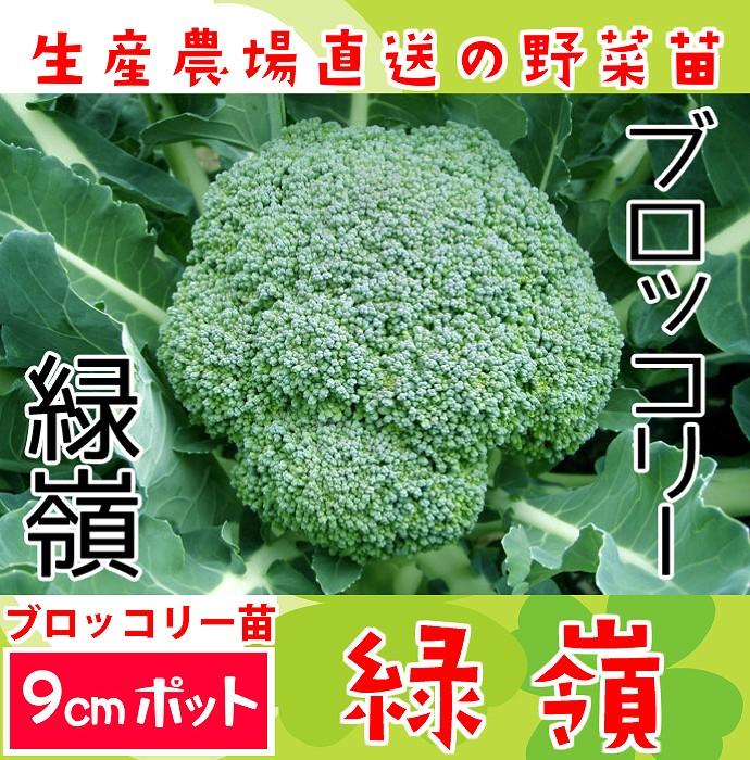 【てしまの苗】 ブロッコリー苗 緑嶺  9cmポット 野菜苗 培土 種 堆肥 【人気】 葉菜苗 【人気】