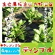 【てしまの苗】 ホウレンソウ苗 ディンプル  4株入りパック   葉菜苗 【人気】