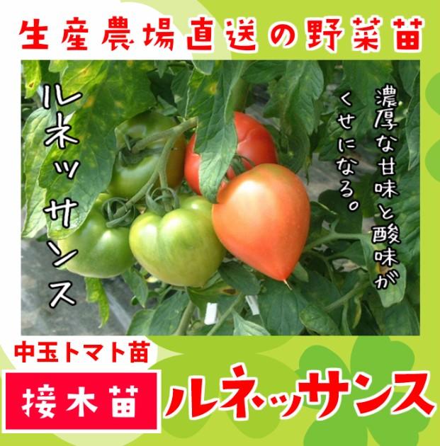 【てしまの苗】 中玉トマト ルネッサンス 断根接木苗 9cmポット 野菜苗 培土 種 堆肥 【人気】