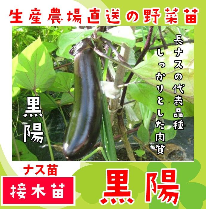 【てしまの苗】  長ナス 黒陽 断根接木苗 9cmポット 野菜苗 培土 種 堆肥 【人気】