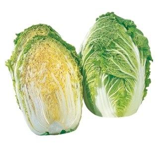 【てしまの苗】 ハクサイ苗 みねぶき505  9cmポット 野菜苗 培土 種 堆肥 【人気】 白菜 葉菜苗 【人気】