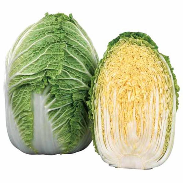 【品種指定なし】ハクサイ 晩生 実生苗 9cmポット 野菜苗 培土 種 堆肥 【人気】 白菜 【人気】