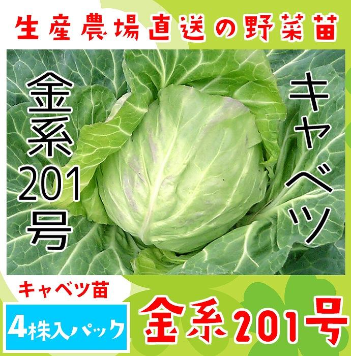 【てしまの苗】 キャベツ苗 金系201号 4株入りパック 葉菜苗 【人気】