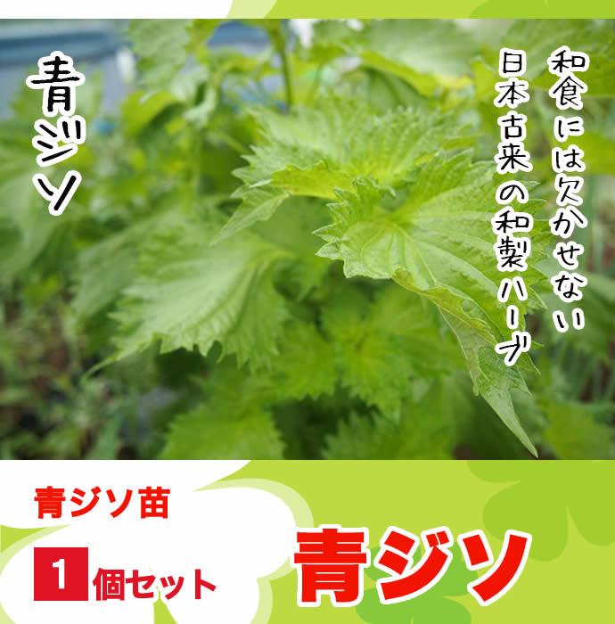 【てしまの苗】 青ジソ 実生苗 9cmポット 野菜苗 培土 種 堆肥 【人気】