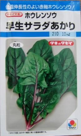 ホウレンソウの種/早生サラダあかり