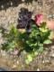 【てしまの苗】ハボタン苗 葉牡丹 おまかせ3色植えセット 10.5cmポット 【人気】