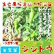 【てしまの苗】 トウガラシ苗 シシトウ 実生苗 9cmポット 野菜苗 培土 種 堆肥 【人気】