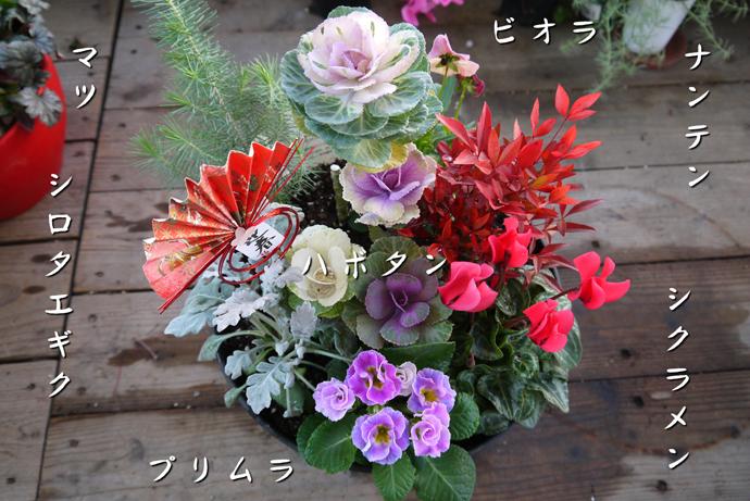 【12月25日発送】【新春を祝うプロの寄せ植え】シクラメン・南天・マツ・プリムラ入り