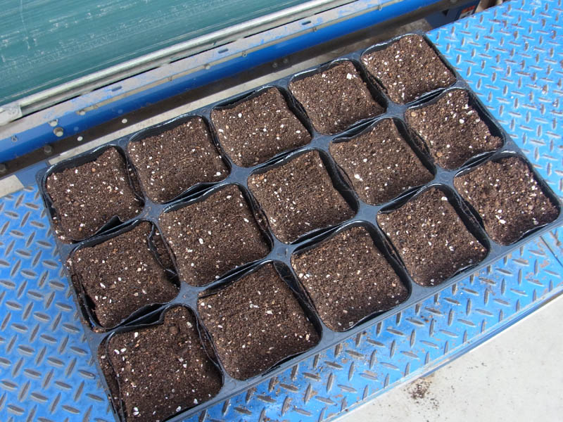 トレー入り培土(一般苗物用培土)