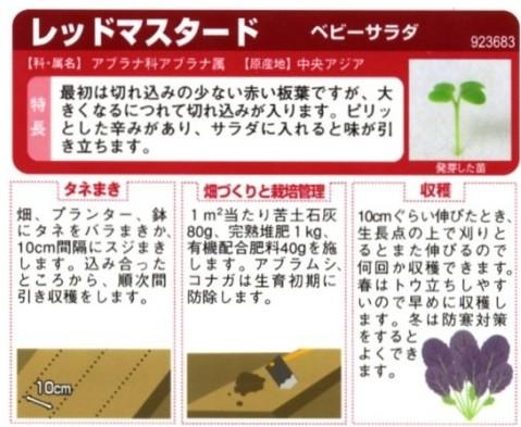 ベビーサラダ レッドマスタードの種