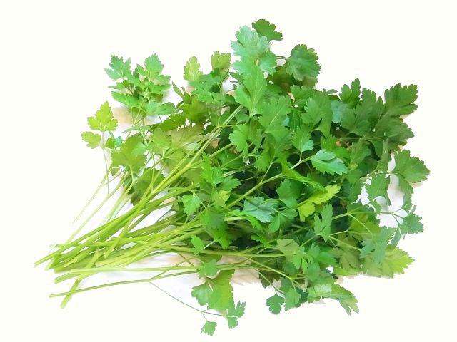 【てしまの苗】 パセリ苗 イタリアンパセリ  9cmポット 野菜苗 培土 種 堆肥 【人気】 葉菜苗 【人気】