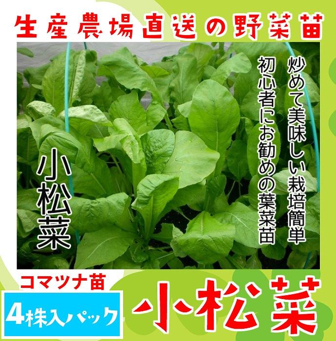 【てしまの苗】 コマツナ苗 小松菜  4株入りパック 葉菜苗 【人気】