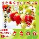 【てしまの苗】  さちのか 7.5-9ccmポット 野菜苗 培土 種 堆肥 【人気】