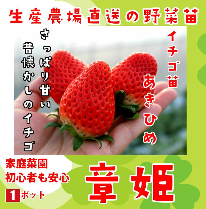 【てしまの苗】  あきひめ 7.5-9ccmポット 野菜苗 培土 種 堆肥 【人気】