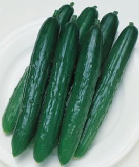 【予約】【品種指定なし】一般的なキュウリ 断根接木苗 9cmポット 野菜苗 培土 種 堆肥 【人気】