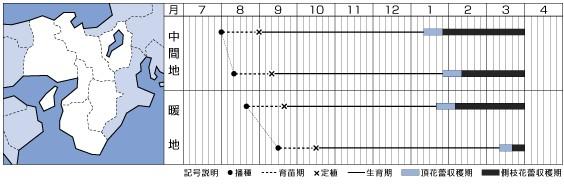 ブロッコリーの種/エンデバーSP