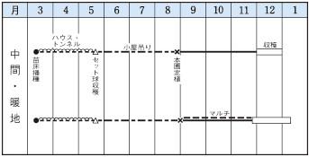タマネギの種/シャルム 6ml DF