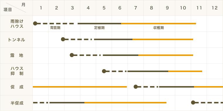 【てしまの苗】カラーピーマン苗 ぷちピー マンゴーオレンジ 断根接木苗 9cmポット 【人気】