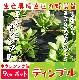 【てしまの苗】 ホウレンソウ苗 ディンプル  9cmポット 野菜苗 培土 種 堆肥 【人気】  葉菜苗 【人気】
