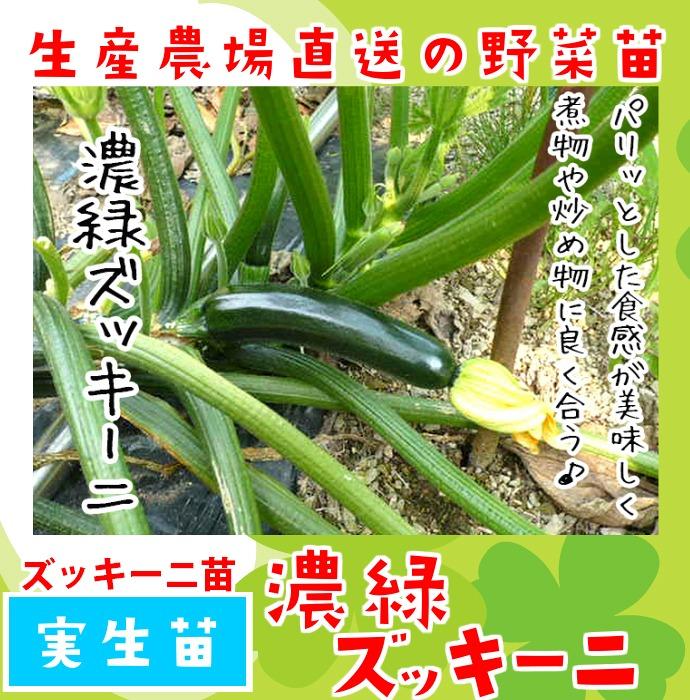 【てしまの苗】 ズッキーニ苗 濃緑ズッキーニ 実生苗 9cmポット 野菜苗 培土 種 堆肥 【人気】