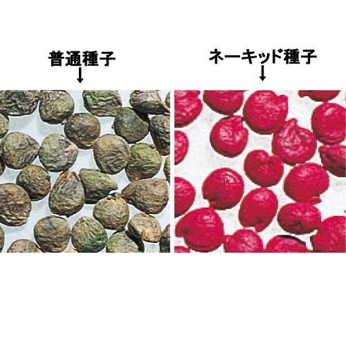 ホウレンソウの種/オーライ® ネーキッド種子