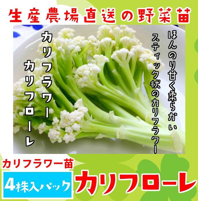【てしまの苗】 カリフラワー苗 カリフローレ 4株入りパック 葉菜苗 【人気】