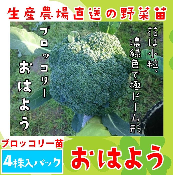 【てしまの苗】 ブロッコリー苗 おはよう  4株入りパック 葉菜苗 【人気】