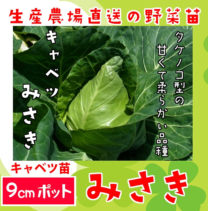 【てしまの苗】 キャベツ苗 みさき 9cmポット 野菜苗 培土 種 堆肥 【人気】 葉菜苗 【人気】