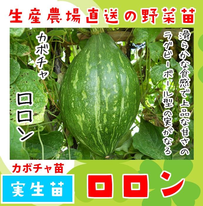 【てしまの苗】 カボチャ苗 ロロン 実生苗 9�ポット 【人気】
