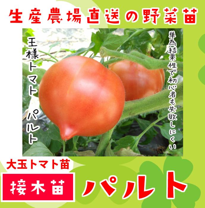 【てしまの苗】 大玉トマト パルト 断根接木苗 9cmポット 野菜苗 培土 種 堆肥 【人気】