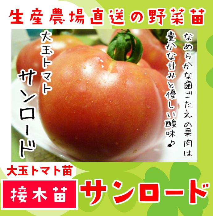 【てしまの苗】 大玉トマト サンロード 断根接木苗 9cmポット 野菜苗 培土 種 堆肥 【人気】