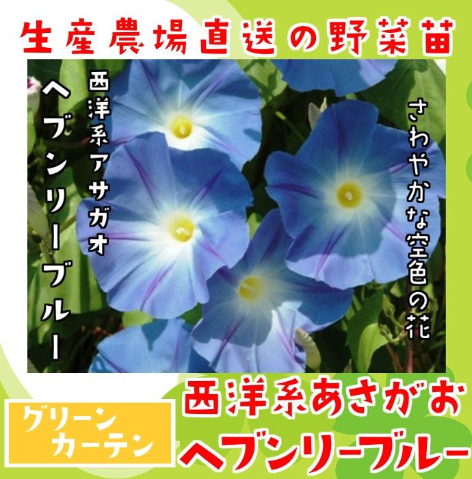 【生産農場直送】アサガオ苗 ヘブンリーブルー 実生苗 グリーンカーテン 9cmポット【人気】